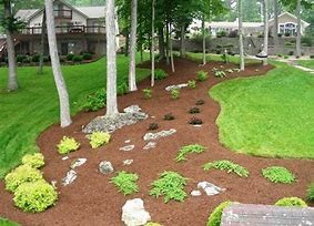 Mulch bed with a few plants