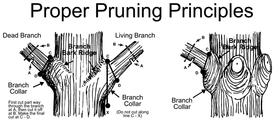Pruning Technique for Trees