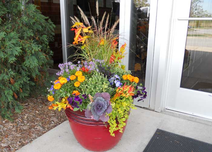 Colorful Fall Planter