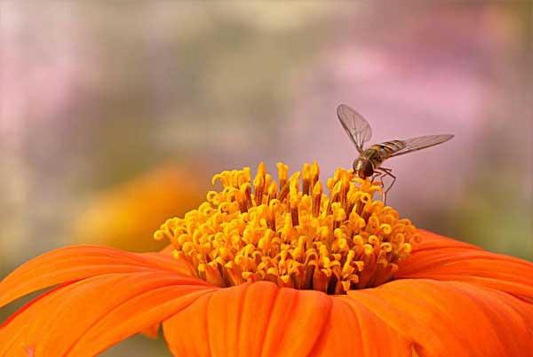 Polinator at flower