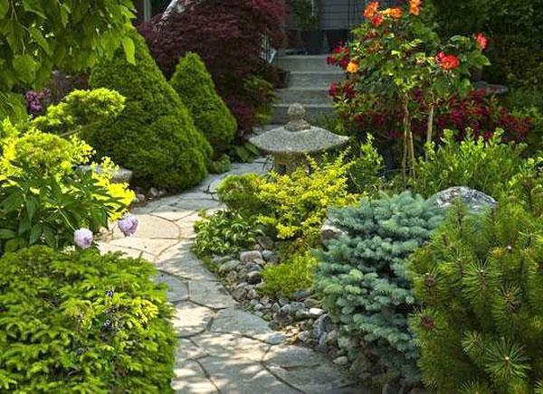 Evergreens along a walkway